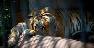 Zoo/Edenlandia/Cinodromo: Mostra d'Oltre Mare Assente